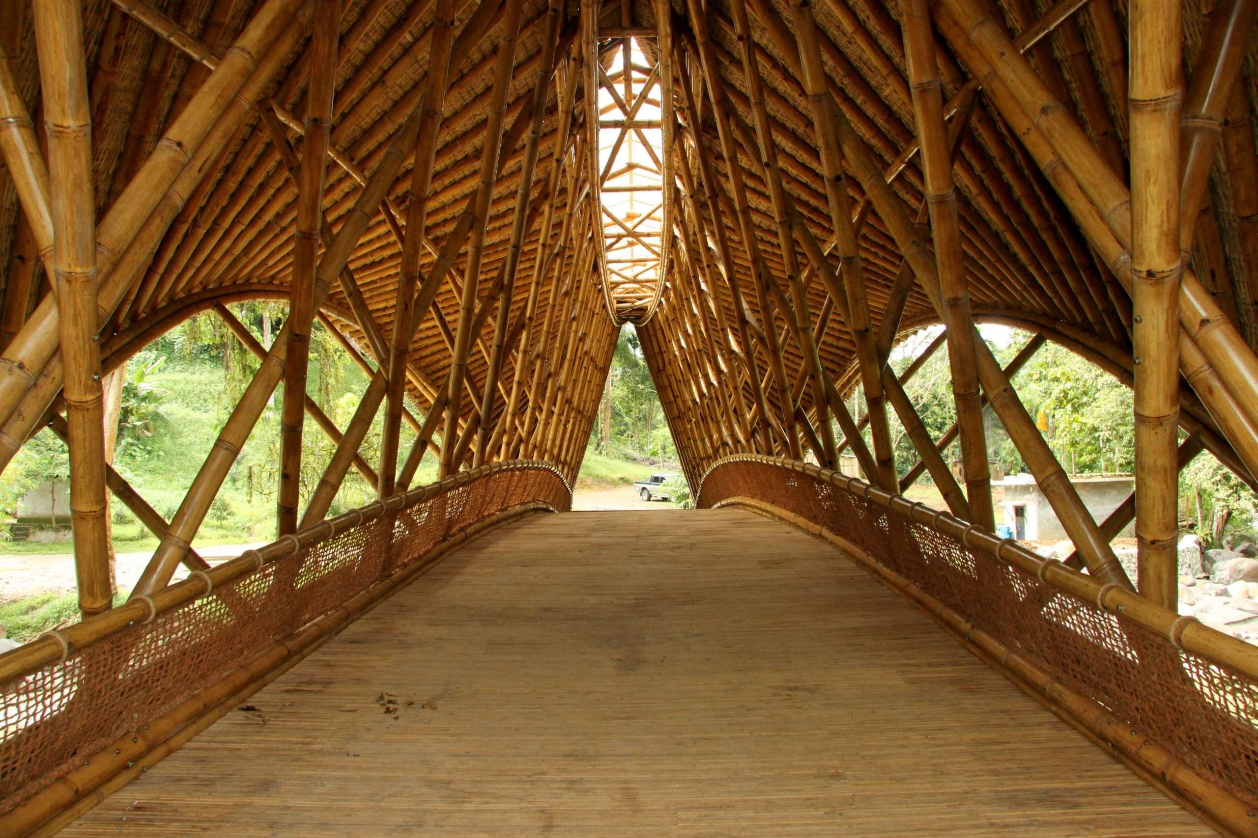 Inside Orangutan Haven Bridge